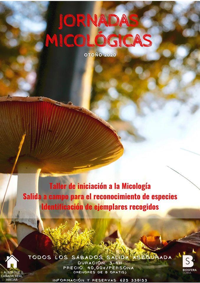 Cartel Micología 2020
